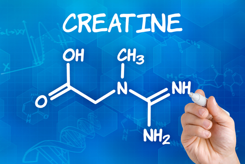 Creatine and the hydraulic retention