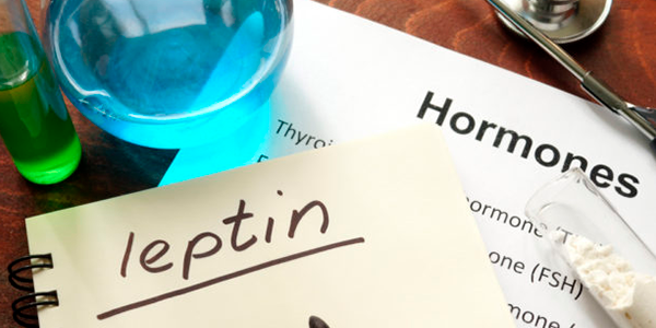 Hormonal Role of Leptin and Ghrelin in the Regulation of Food